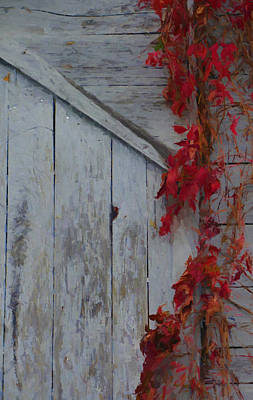 Painting - Red Vine On Barn by Dan Sproul