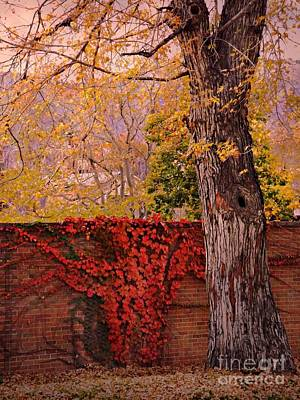 Digital Art - Red Vine With Maple Tree by Annie Gibbons
