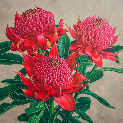 Australian Flowers Painting - Red Waratah Beauty 3 by Fiona Craig