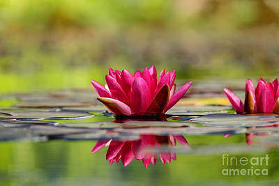Photograph - Red Water Lilies by Teresa Zieba