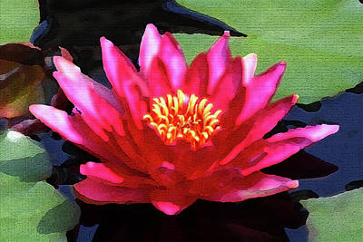 Photograph - Red Water Lily - Palette Knife by Lou Ford