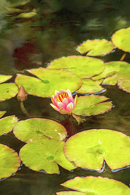 Digital Art - Red Water Lily by Mike Braun
