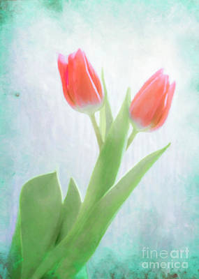 Kim Fearheiley Photography - Red Watercolor Tulips in Light by Hal Halli