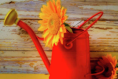 Red Watering Can And Sunflower Art Print