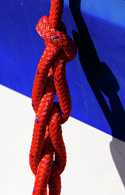 Photograph - Red White And Blue by Sandy Molinaro