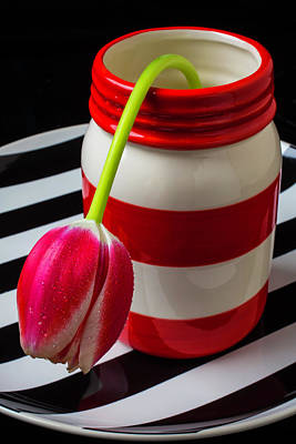Water Jars Photograph - Red White Jar With Tulip by Garry Gay