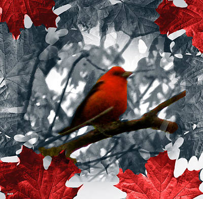 Red Wild Bird Art Print by Debra     Vatalaro