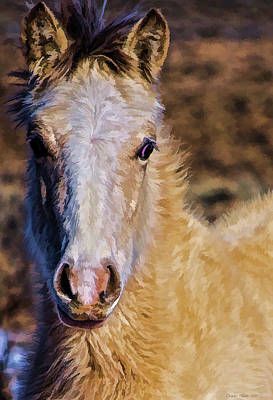 Kim Fearheiley Photography Royalty Free Images - Red Willow pony Royalty-Free Image by Charles Muhle