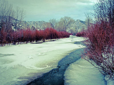 Photograph - Red Willows On The Embudo by Atom Crawford