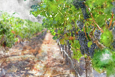Photograph - Red Wine Grapes In A Vineyard by Brandon Bourdages