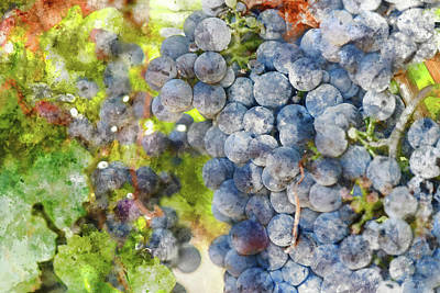 Photograph - Red Wine Grapes In The Vineyard by Brandon Bourdages