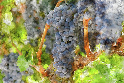 Wine Photograph - Red Wine Grapes On The Vine In A Vineyard by Brandon Bourdages