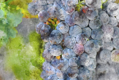Photograph - Red Wine Grapes On The Vine Macro by Brandon Bourdages