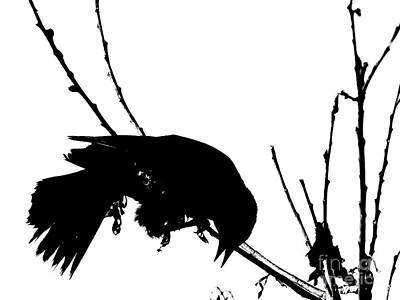 Photograph - Red Wing Black Bird Silhouette by Ron Tackett