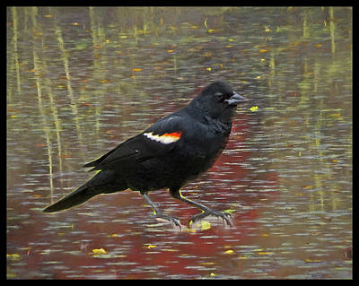 Digital Art - Red Winged Black Bird Perching by Rusty R Smith