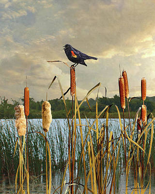 Digital Art - Red-winged Blackbird And Cattails by IM Spadecaller