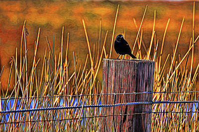 Photograph - Red-winged Blackbird Painted by Judy Vincent