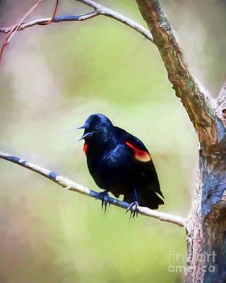 Photograph - Red-winged Blackbird Squawk by Kerri Farley