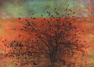 Photograph - Red-winged Blackbirds by Anna Louise