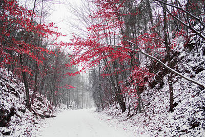 Photograph - Red Winter Path by Parker Cunningham