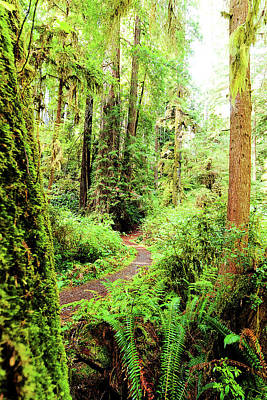 Photograph - Red Woods Trail by Norman Hall