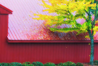 Photograph - Red Yellow Green by Dee Browning