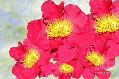 Camellias Photograph - Red Yuletide Camellia by Laura D Young