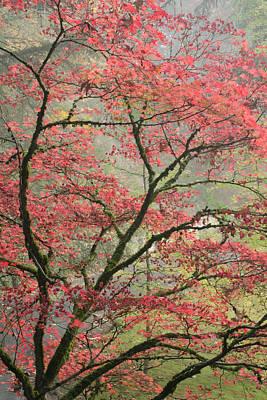 Photograph - Red Zen by Don Schwartz