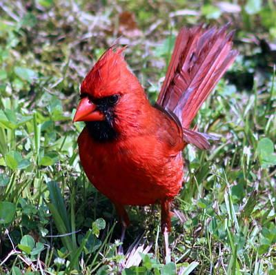 Antlers - Redbird by Yvonne Tackett