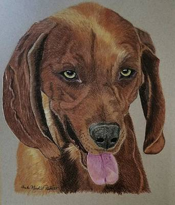 Drawing - Redbone Coonhound by Anita Putman