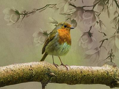 Photograph - Redbreast Bird by Movie Poster Prints