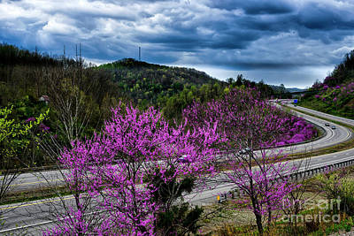 Photograph - Redbud Along I-79 by Thomas R Fletcher