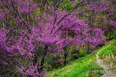 Art Print featuring the photograph Redbud And Path by Thomas R Fletcher