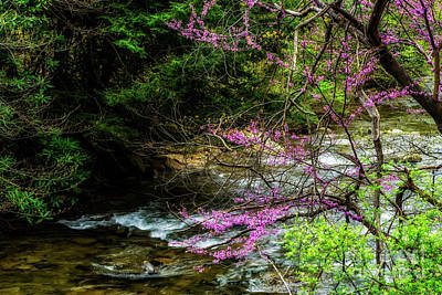 Cercis Canadensis Photograph - Redbud And River by Thomas R Fletcher
