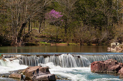 Photograph - Redbud At Marble Creek by Steve Stuller