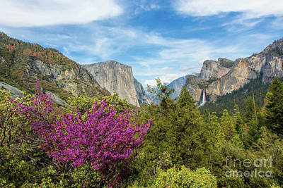 Half Dome Photograph - Redbud At Tunnel View by Mimi Ditchie