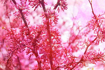 Photograph - Redbud Blossoms by Scott Hovind
