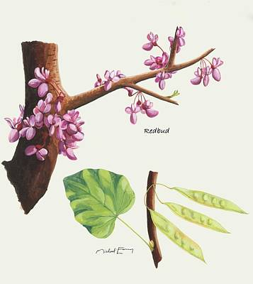 Painting - Redbud - Cercis by Michael Earney