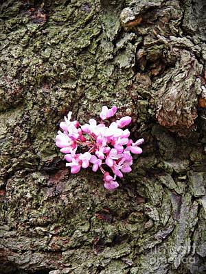 Photograph - Redbud Flowers 1  by Sarah Loft