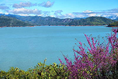 Photograph - Redbud Glory At Lake Shasta by Lynn Bauer