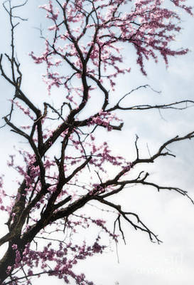 Keeper Of The Plains Photograph - Redbud Meditation by Fred Lassmann
