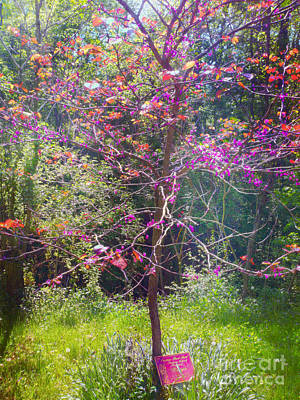 Montour Photograph - Redbud Morning by Shelly Weingart