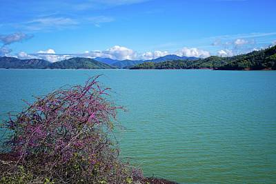 Photograph - Redbud On The Shore At Lake Shasta by Lynn Bauer