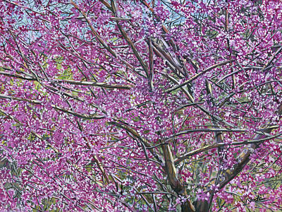 Painting - Redbud Tree by Nadi Spencer