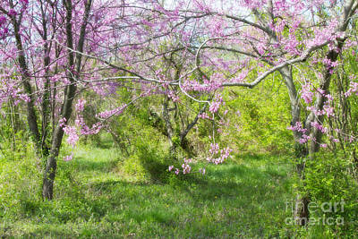 Photograph - Redbud Trees 1 by Chris Scroggins