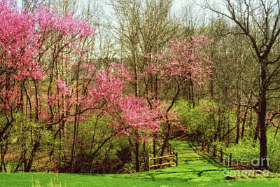 Digital Art - Redbud Trees In Spring by Karen Adams