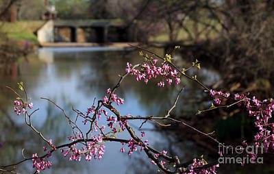 Redbuds And An Old Bridge Art Print