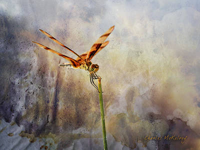 Photograph - Reddish Dragonfly by Charles McKelroy