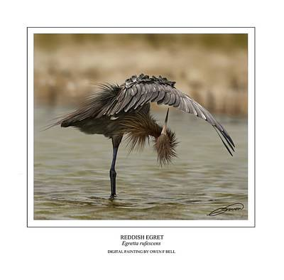 Egret Digital Art - Reddish Egret 2 by Owen Bell