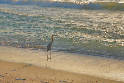 Reddish Egret In Surf Art Print
